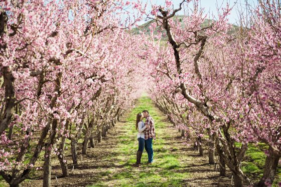 orchard-engagement-photos-4
