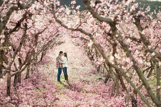 orchard-engagement-photos-8